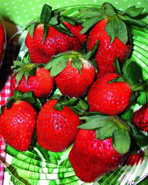 popular strawberry varieties to grow hgtv