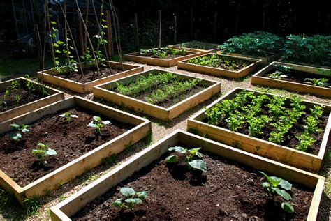 Raised Bed Garden Layout Home Gardening 101 Build The Garden 3 Basic