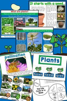 the first grade parade the plants dance 1000 images about plant unit on pinterest plant life