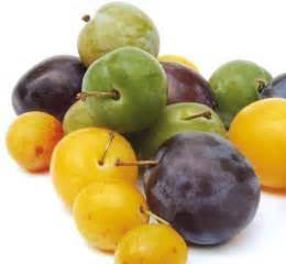 cookissime le magazine des gastronautes la prune