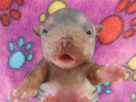 silicone puppies ebay ping lau d3 creation silicone newborn retriever baby puppy w feeding bottle ebay