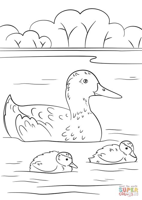 Coloring Pictures Of Ducks by Duck And Duckling Coloring Pages Www Pixshark