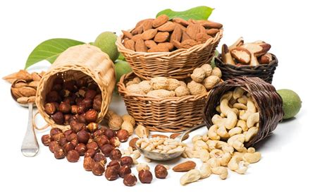 are pistachios for dogs what are the safe nuts for dogs to eat healthy