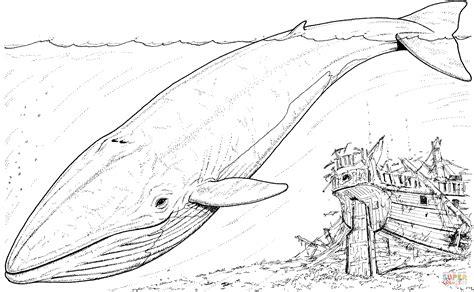 minke whale coloring page dibujo de ballena azul y barco hundido para colorear