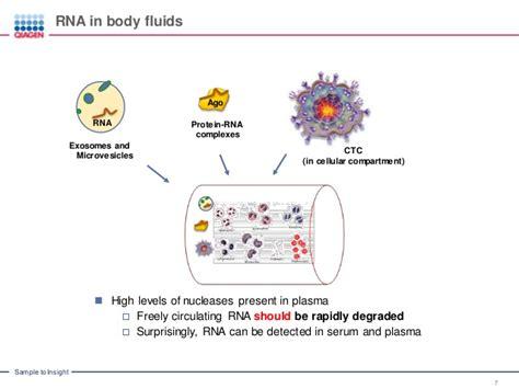 protein levels in urine total protein levels in urine ketogenicdietpdf