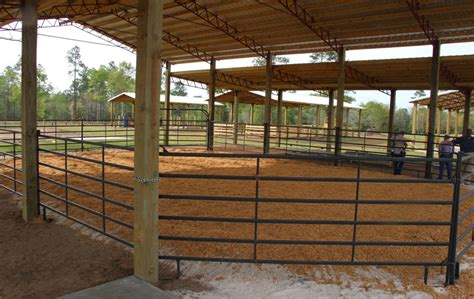 The Barn Show Annual Livestock Show And Sale Saturday At New 4 H Barns
