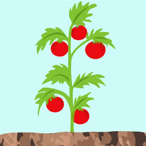 Tomato Tree by Tomato Plants Clipart 26