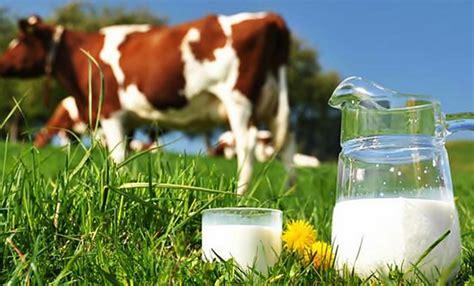 Sapi Murni Segar 5 manfaat yang dihasilkan oleh sapi murni kamu tahu generasi muda id