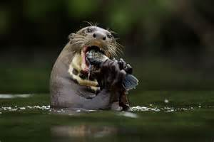 Teenage cousins are attacked by otter as like something out of jaws