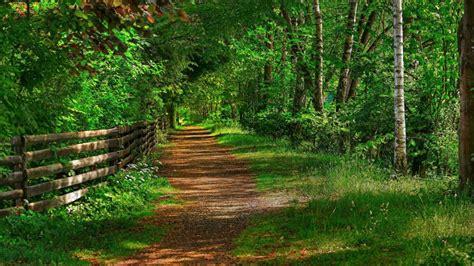 camino verde camino verde fondos de pantalla hd fondos de escritorio