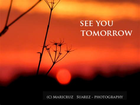 see you tomorrow i you books see you tomorrow quotes quotesgram
