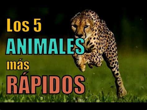 imagenes de animales rapidos los 5 animales m 225 s r 193 pidos del mundo youtube