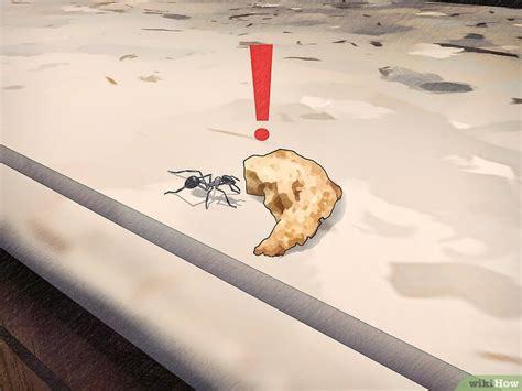 Kaffeesatz Gegen Ameisen by 5 Formas De Eliminar Las Hormigas Naturalmente Wikihow