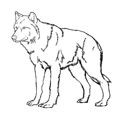 12 wolf coloring pages print color craft