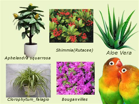 uccelli da appartamento piante d appartamento tossiche per pappagallini