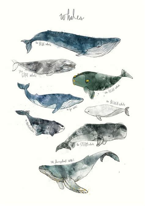 Whale Printing Whales Canvas Print Biology Whale