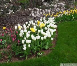 15 spring garden design ideas flower beds and evergreen