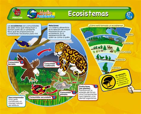 cadena alimenticia sencilla para niños mil recursos ecosistemas ii
