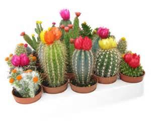 Startseite pflanzen amp pflege zimmerpflanzen kakteen kaktus mit
