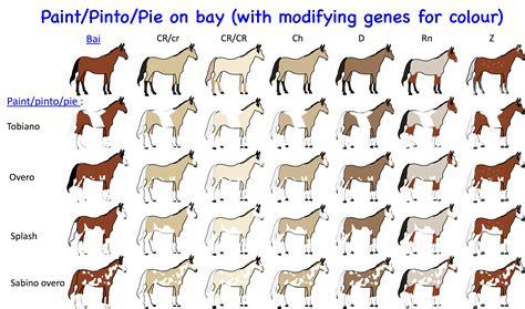 coat color calculator equine color genetics equine color genetics by d