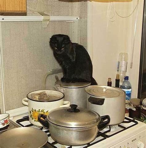 cucinare per il gatto dovete preparare la cena questi 8 aiuto cuochi potrebbero