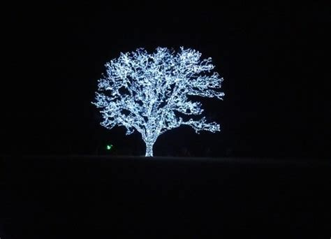 beautiful tree in flower mound it is lit up every call me for directions on