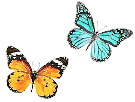 new themes butterfly transform your website with a new theme jane b website help