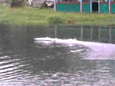 super fast rc boat videos super fast rc boat vanquish indonesia mp4 youtube