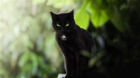 schwarze katze gruene augen  iphone   hintergrundbilder hd bild
