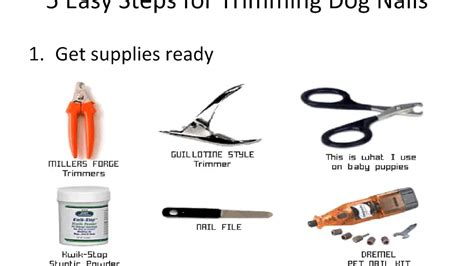 how to trim puppy nails how to cut dogs nails november 2017