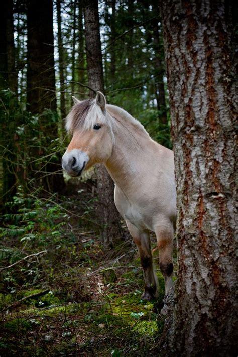 fjord tough 164 best fjord tough horsing around images on pinterest