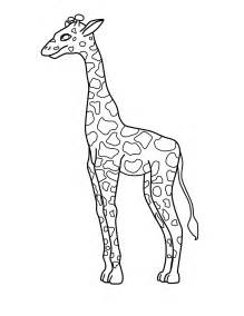 giraffe colors free printable giraffe coloring pages for