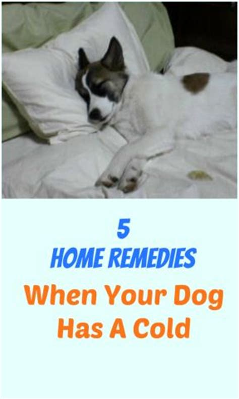 puppy has a cold 17 best ideas about cold symptoms on congestion relief essential uses