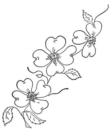 coloring pages of dogwood flowers dogwood flower sketch drawings sketch coloring page