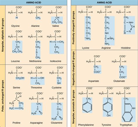 What Is Another Name For A Protonated Water Molecule Proteins 183 Biology