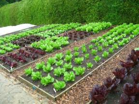 moestuin tuintips tuincentrum borghuis in deurningen