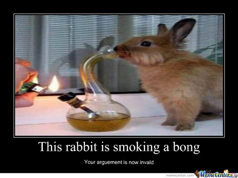 Rabbit Meme - rabbit by kimmork1 meme center