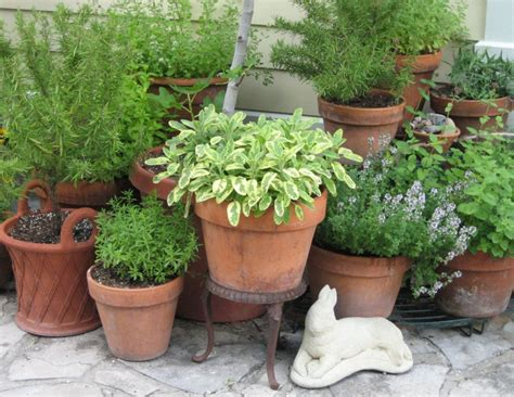 herb pots outdoor seed to feed me growing herbs
