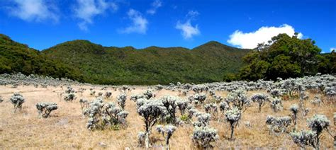 Kaos Gunung Gede Pangrango Tebing 5 lokasi di indonesia dengan padang edelweis terindah