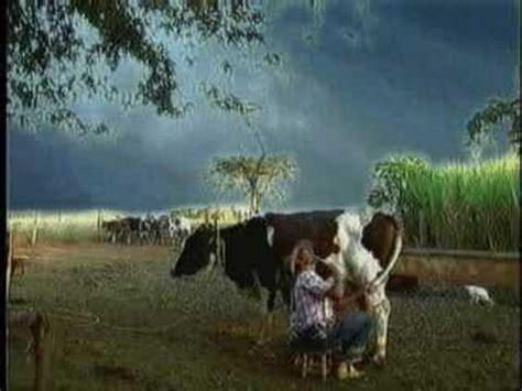 sorprenden hombre cojiendo una vaca apexwallpapers com hqdefault jpg