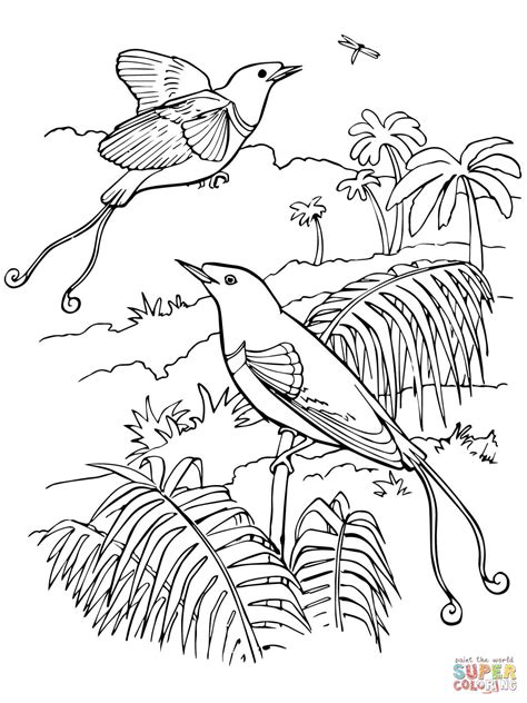 coloring pages bird of paradise 301 moved permanently