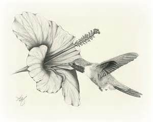bird drawing best images collections hd for gadget
