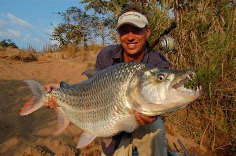 master the art of tiger fishing with these secret fishing