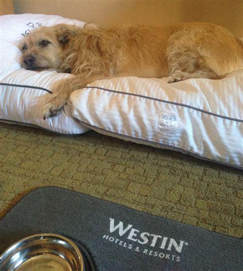 simmons heavenly bed simmons heavenly bed bring home a westin heavenly bed duxiana mattress review