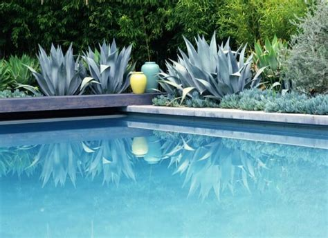17 best ideas about plants around pool on pinterest insect repellent plants anti mosquito