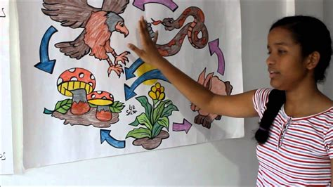 cadena alimenticia red trofica red tr 243 fica youtube