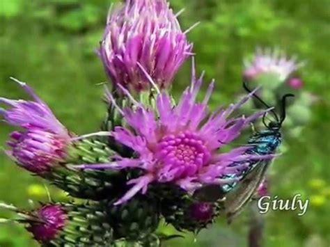 nomi fiori di montagna fiori di montagna 4