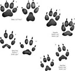 USGS Kids  Animal Tracks sketch template