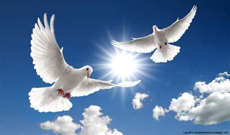 white holy doves flying in cloudy sky white doves in blue