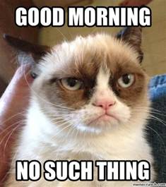 Good Morning Cat Meme - the gallery for gt good morning angry cat